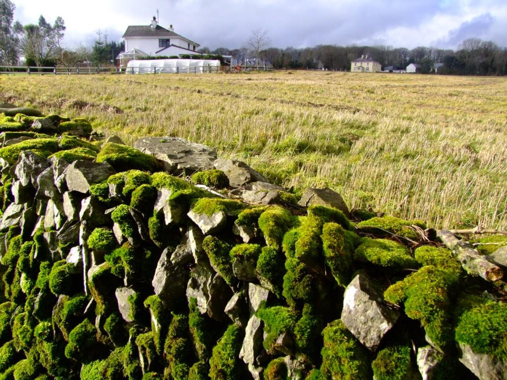 529b. Ardrum stone wall, Inniscarra