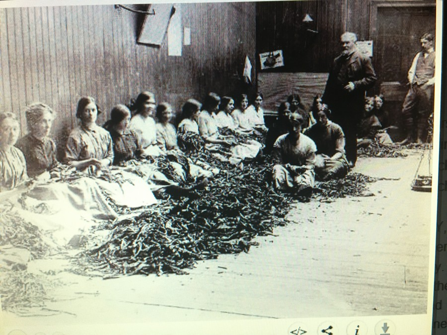847a. Photograph of staff of Lambkins Snuff and Tobacco Factory