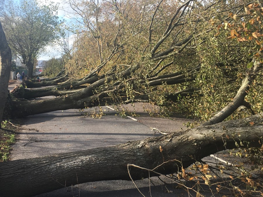 Storm Ophelia, damage on Centre Park Road, Cork, 16 October 2017