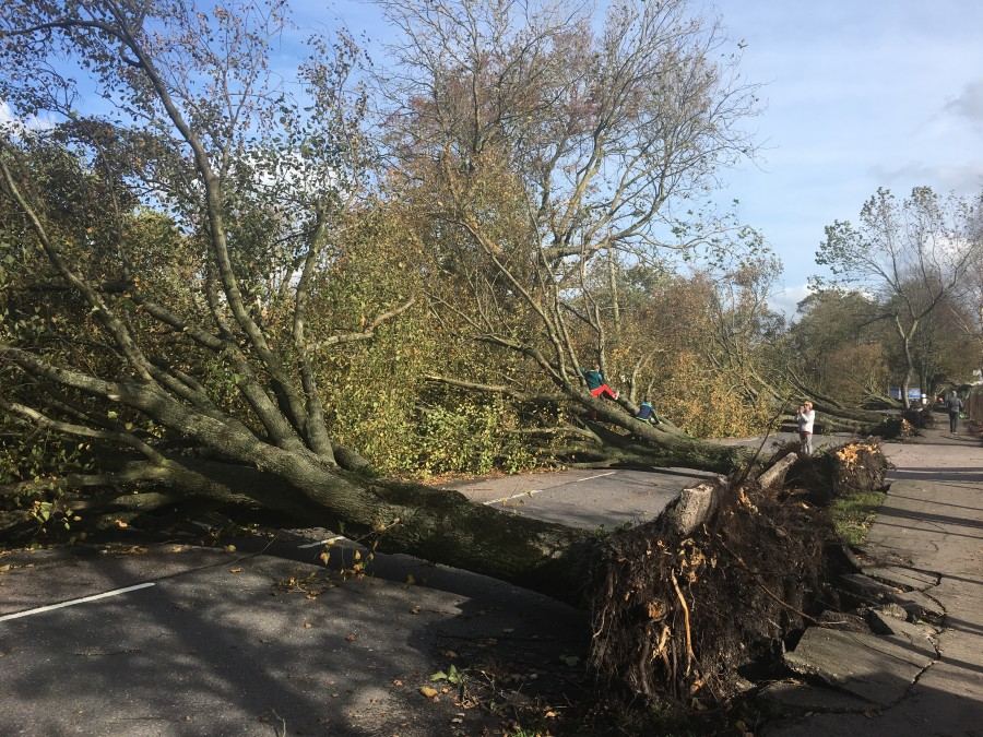 Storm Ophelia, damage on Centre Park Road, Cork, 16 October 2017