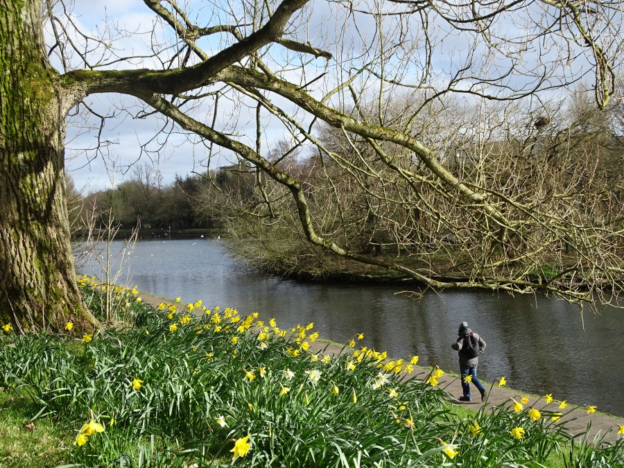 Spring sunshine, Atlantic Pond, Cork, 19 March 2018