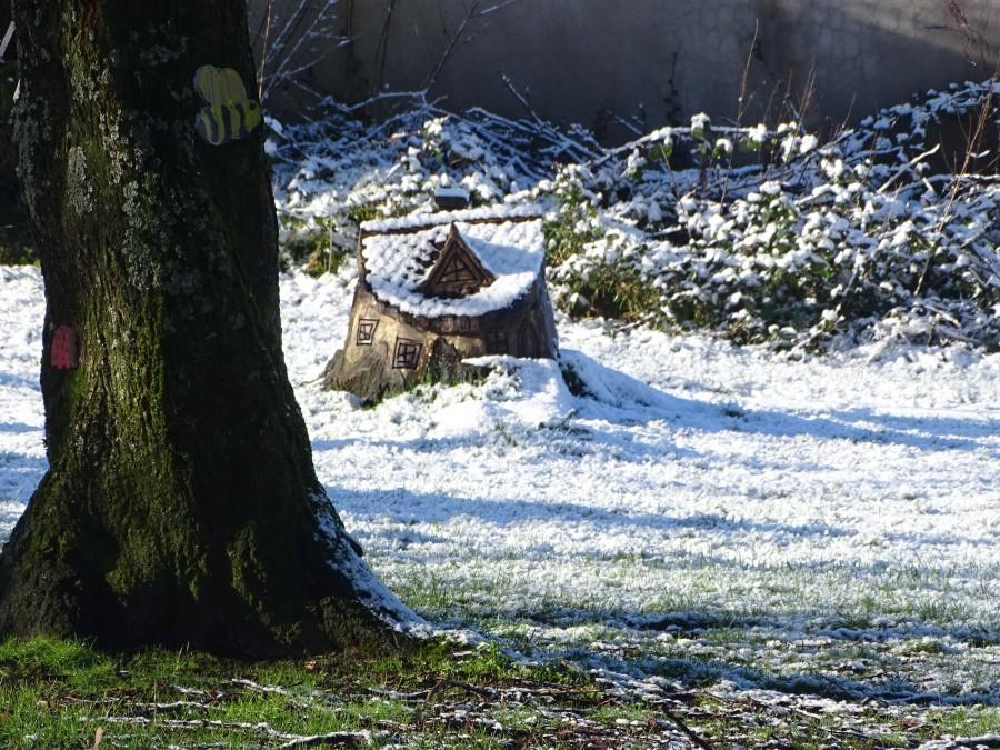 Japanese Gardens, Ballinlough, Cork, 30 January 2019
