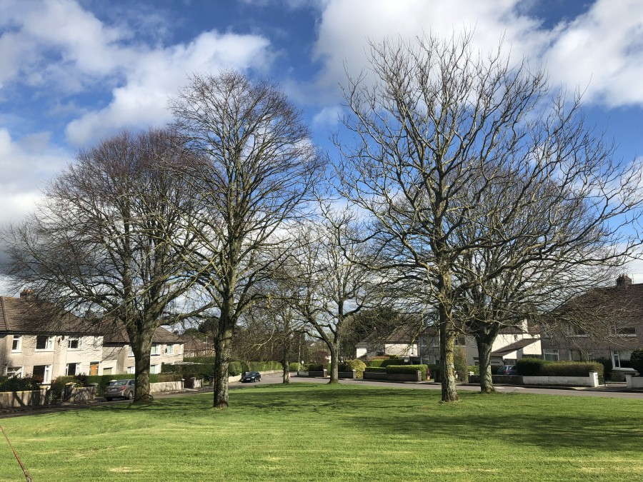 Trees at Beaumont, April 2019
