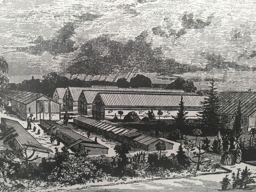 1010b. The Lough Nurseries operated by the Hartland family, c.1867, one of the themes on Kieran's upcoming walking tours for National Heritage Week