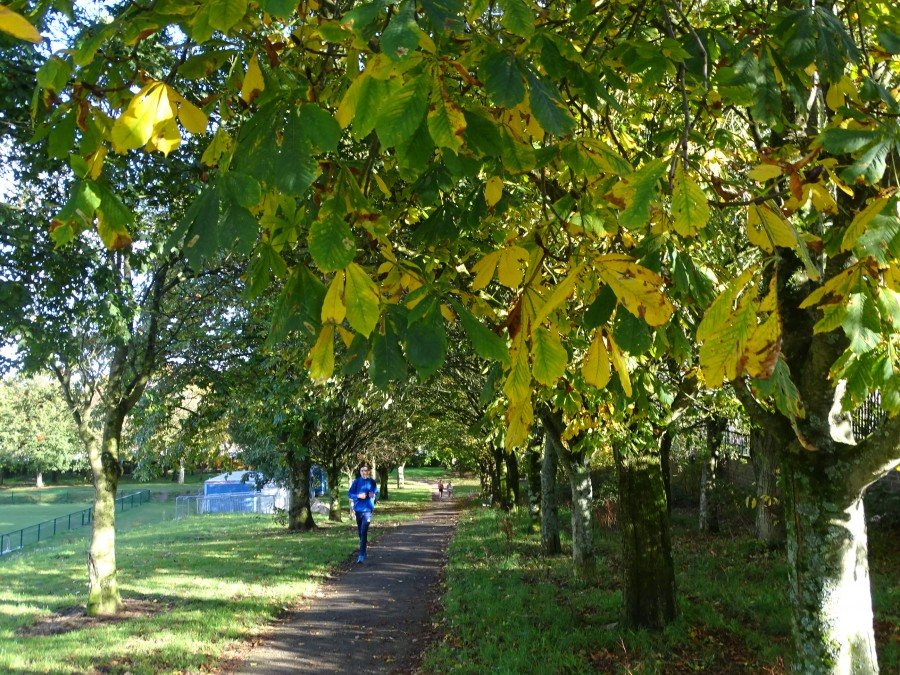 Autumnal Landscapes in Cork's Beaumont Park, 26 October 2019