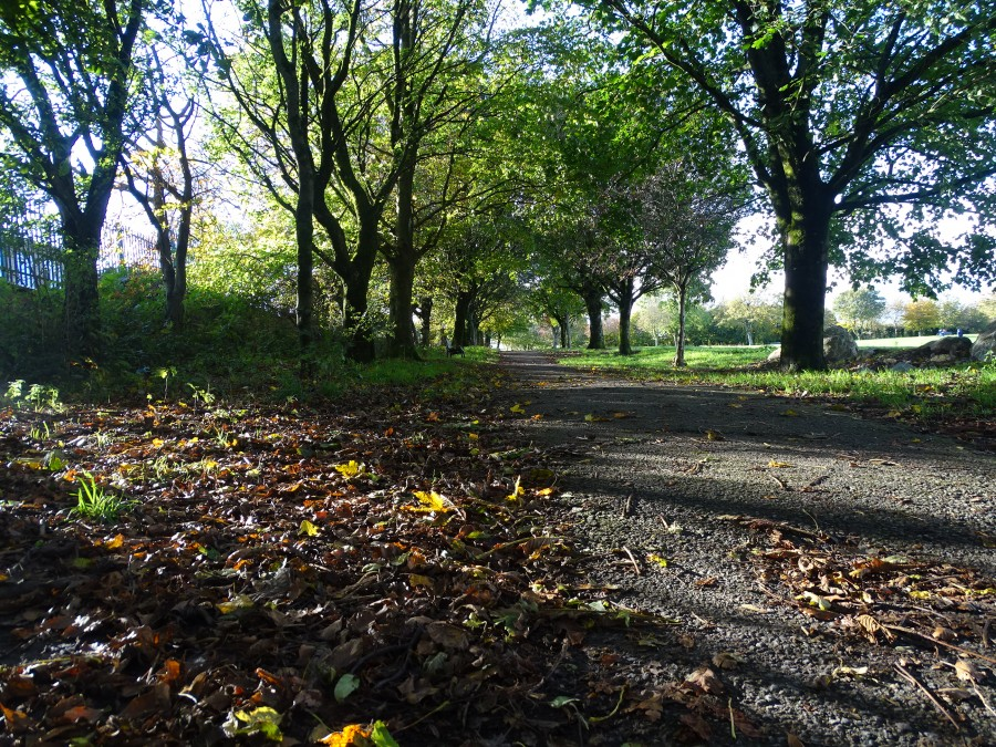 Autumnal Landscapes in Cork's Beaumont Park, 26 October 20194.