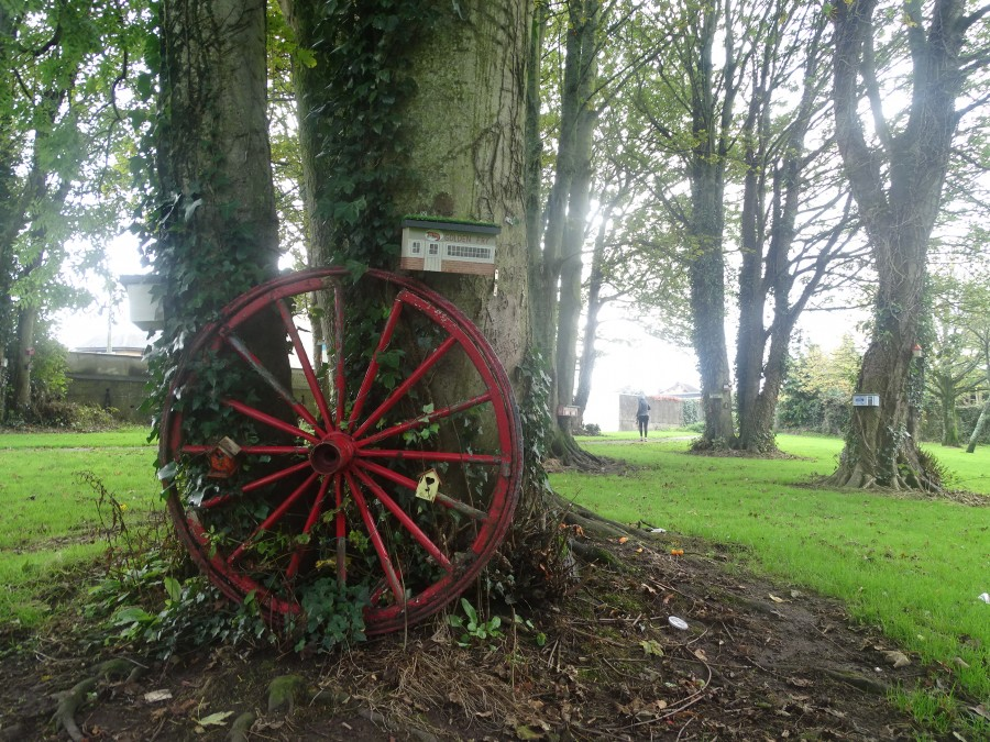 Autumn at Ballinlough Community Park, 13 October 2019