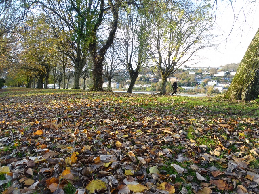 Autumn on The Marina, 9 November 2019