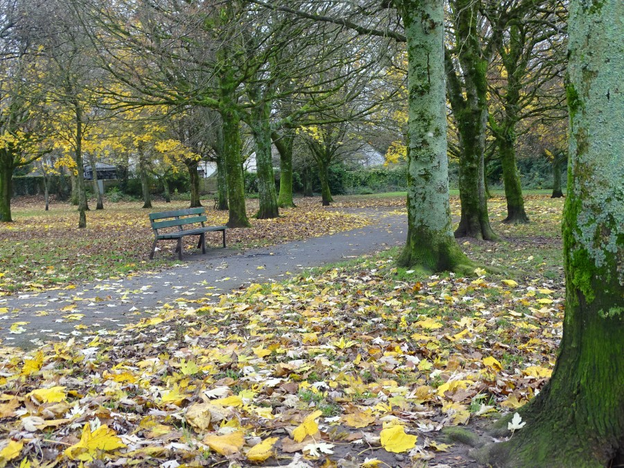 Last of the autumn leaves falling at the Japanese Gardens, Ballinlough, 24 November 2019