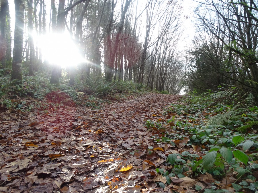 Old Court Woods, Garryduff, 1 December 2019
