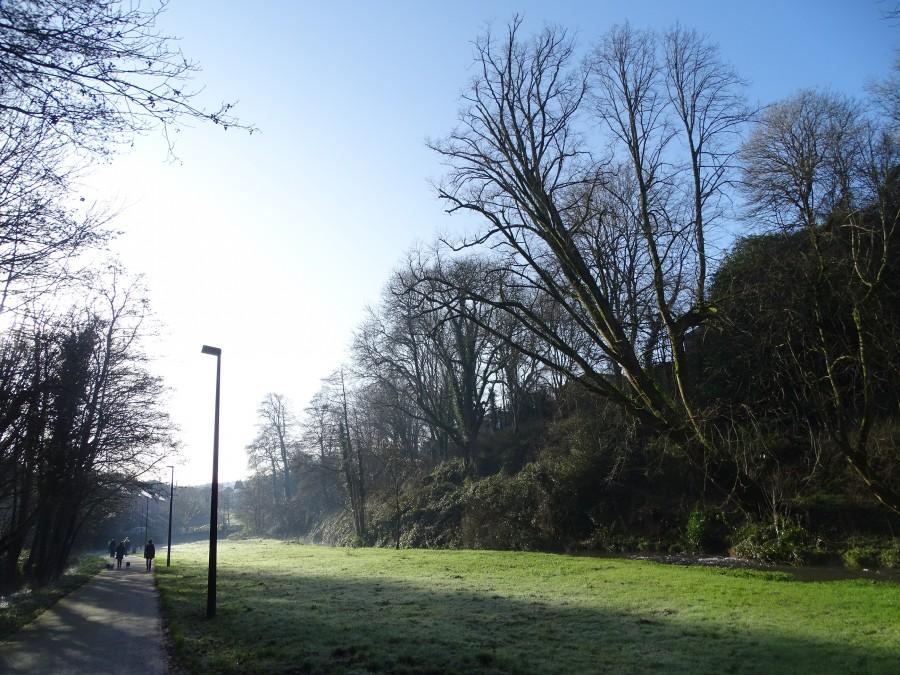 Ballybrack Woods & Mangala Walk, Douglas, Cork, 18 January 2020
