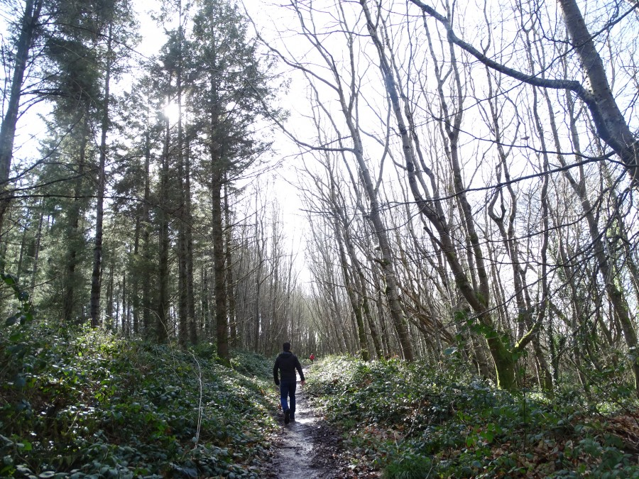 Old Court Woods, Garryduff, Rochestown, 15 March 2020