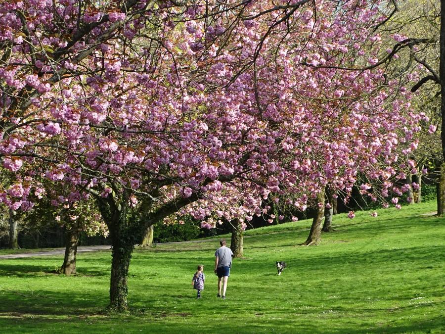 Japanese Gardens, Ballinlough April 2020