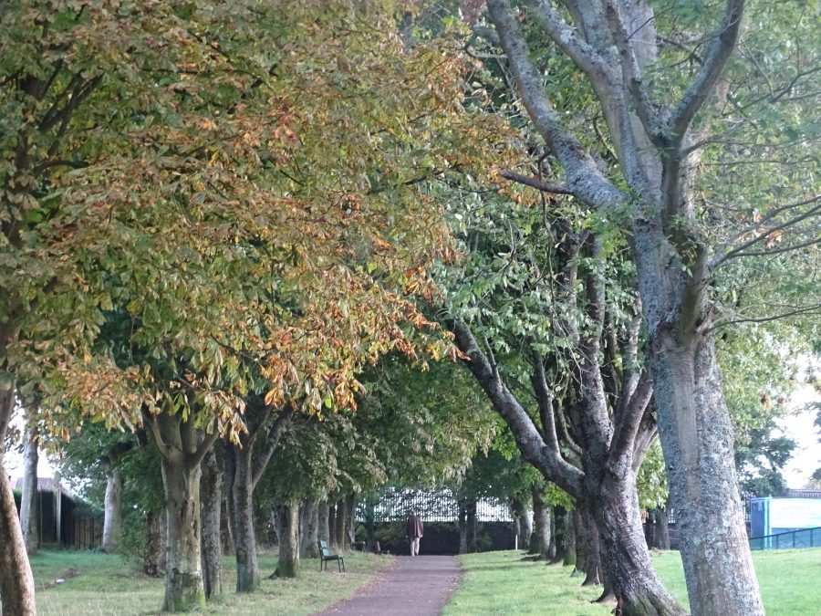 Autumnal Transitions, Beaumont Park, 6 October 2020 (Cllr Kieran McCarthy)