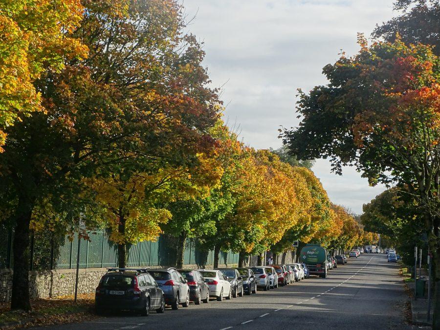 Autumn on Boreenmanna Road, Cork 2020