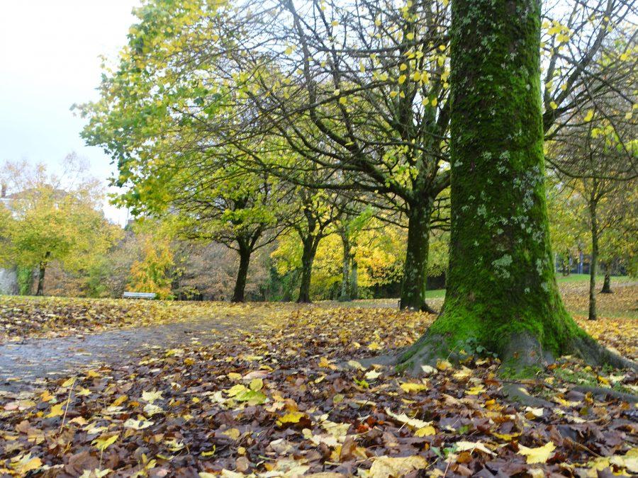 Japanese Gardens, Ballinlough, Cork, 16 November 2020 (picture: Cllr Kieran McCarthy)