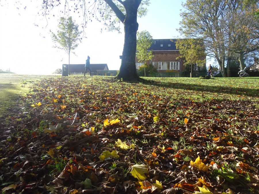 Autumn at Ballinlough Community Park 2020 (Picture: Cllr Kieran McCarthy)