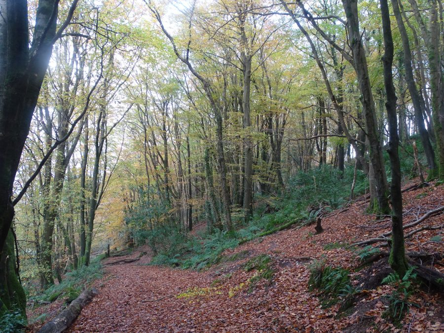Old Court Woods, Garryduff, Rochestown, Cork, 6 November 2020 (picture: Cllr Kieran McCarthy)
