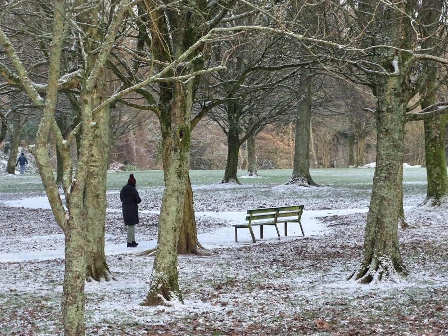Paths of Snow, Japanese Gardens, Ballinlough, Cork,7 January 2021 (picture: Kieran McCarthy)