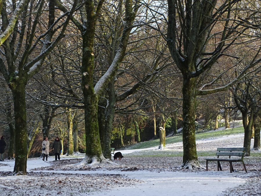 Paths of Snow, Japanese Gardens, Ballinlough, Cork, 7 January 2021 (picture: Kieran McCarthy)