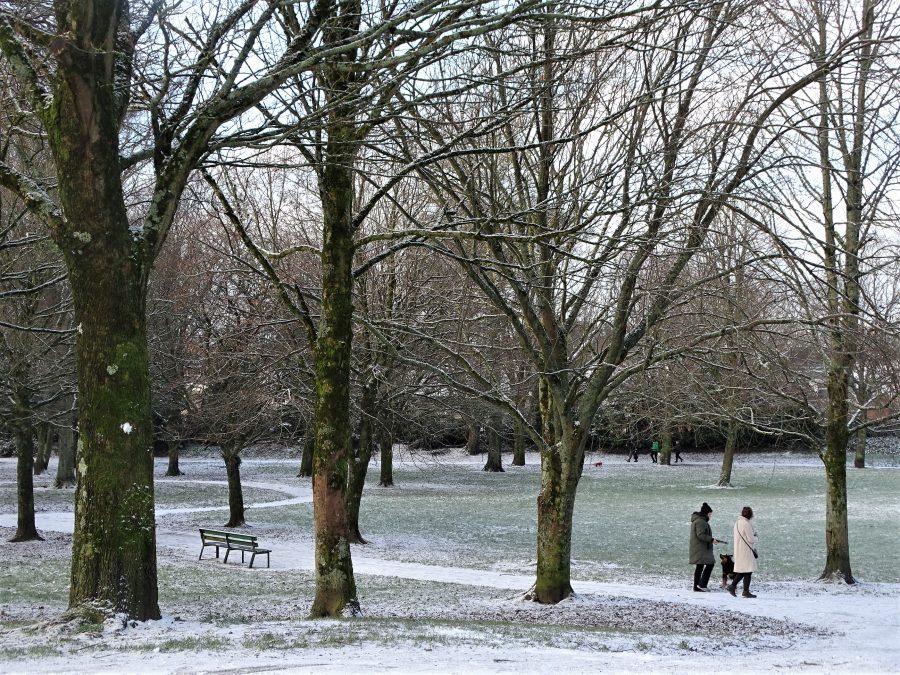 Paths of Snow, Japanese Gardens, Ballinlough, Cork, 5 January 2021 (picture: Kieran McCarthy)