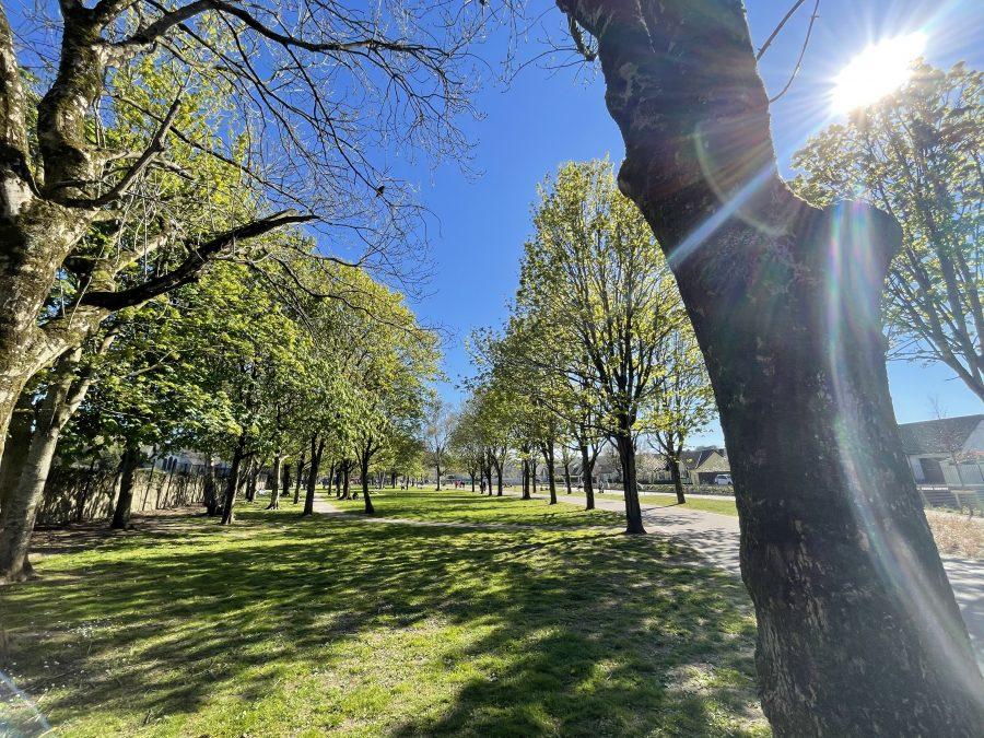 Spring at Douglas Community Park, Cork (picture: Kieran McCarthy)