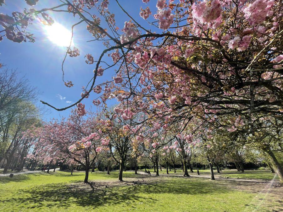 Spring at Japanese Gardens, Ballinlough (picture: Kieran McCarthy)