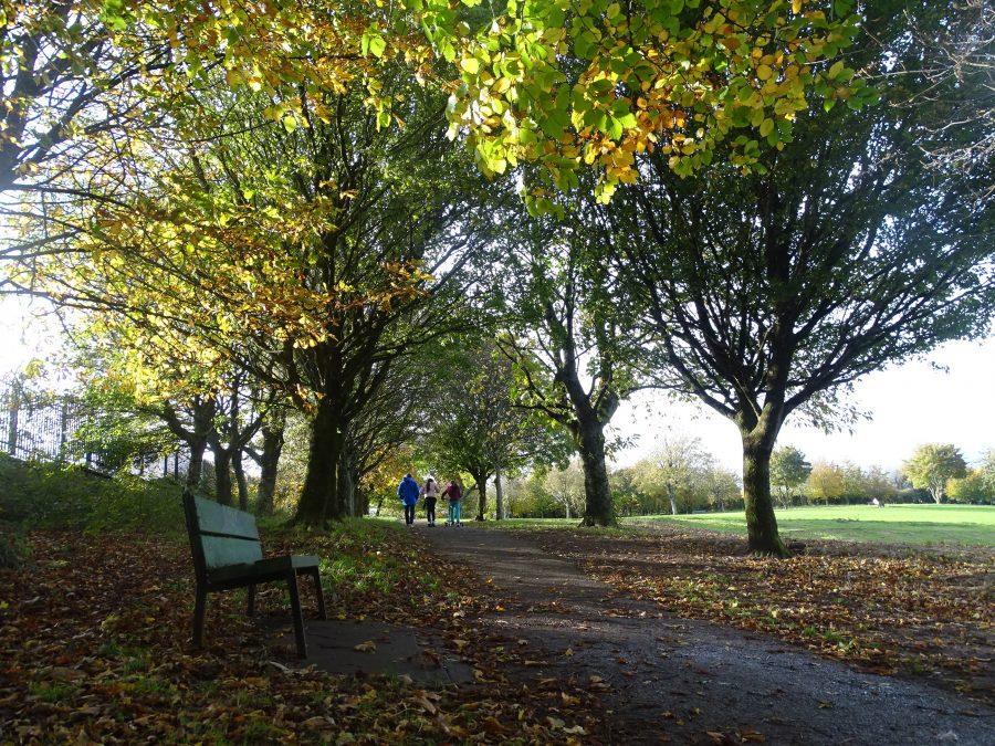 Autumn at Beaumont Park, Cork (picture: Kieran McCarthy)
