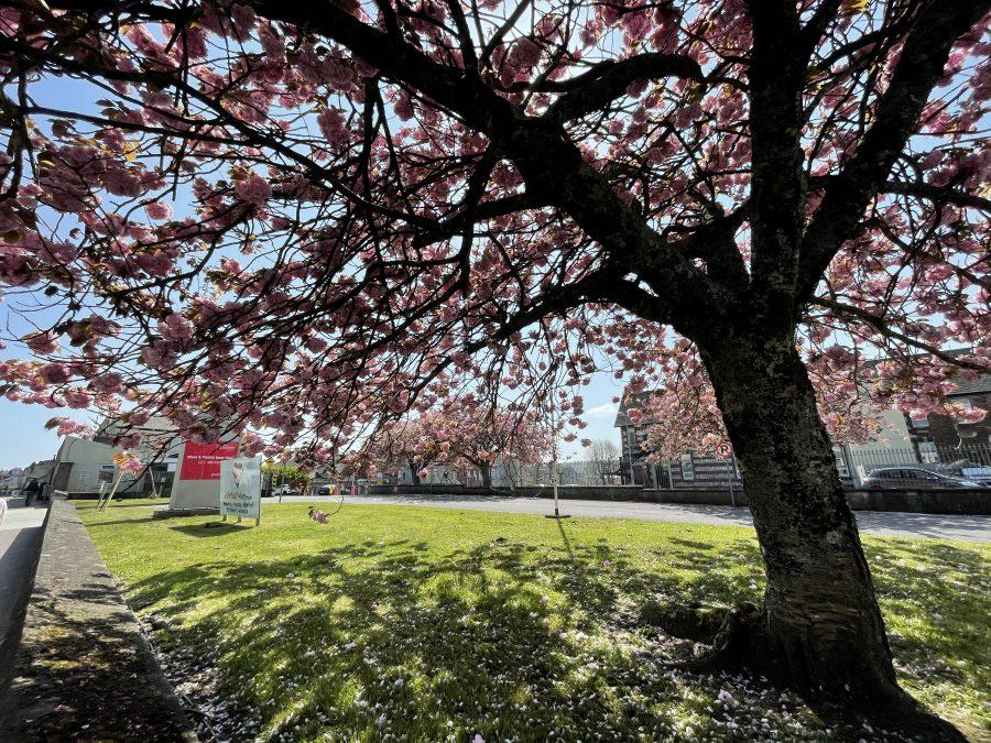 Spring at St Finbarr's Hospital, Douglas Road, Cork (picture: Kieran McCarthy)